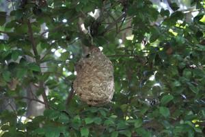 公園内にスズメバチの巣を発見 2