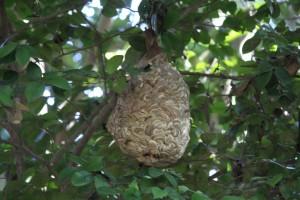 公園内にスズメバチの巣を発見 3