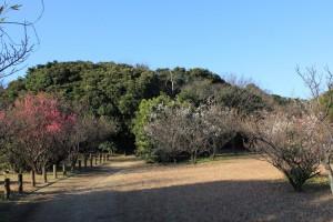 森と広場ゾーン 梅
