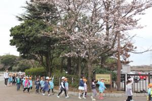 市民ふれあい公園 さくらの木の下を通る園児達