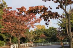 紅葉シーズンの始まり