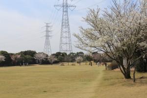 ② 多目的広場 さくらの木の下でグラウンドゴルフ