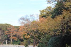 公園内の木々も紅葉かな?